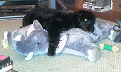 Tiny alien dog topples, exhausted, onto captured elephant.